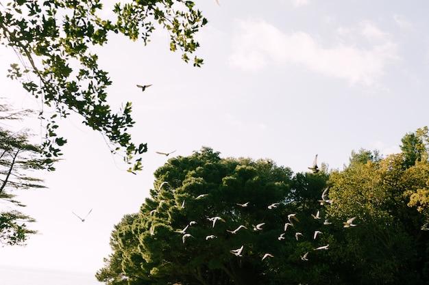 Bela vista de um parque verde e gaivotas