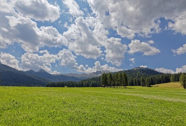 Bela vista de um prado alpino de floração nas dolomitas italianas. alpes italianos, alto adige.