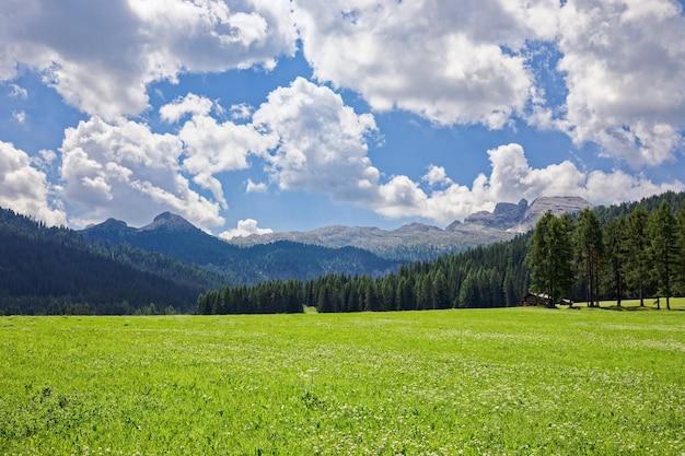 Bela vista de um prado alpino de floração nas dolomitas italianas.