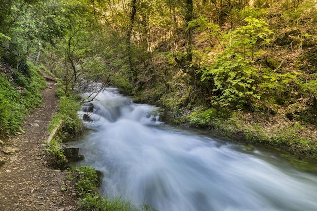 Bela vista de um riacho fluindo pela floresta verde