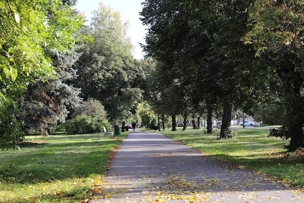 Bela vista de uma calçada cercada por árvores altas em campos cobertos de grama
