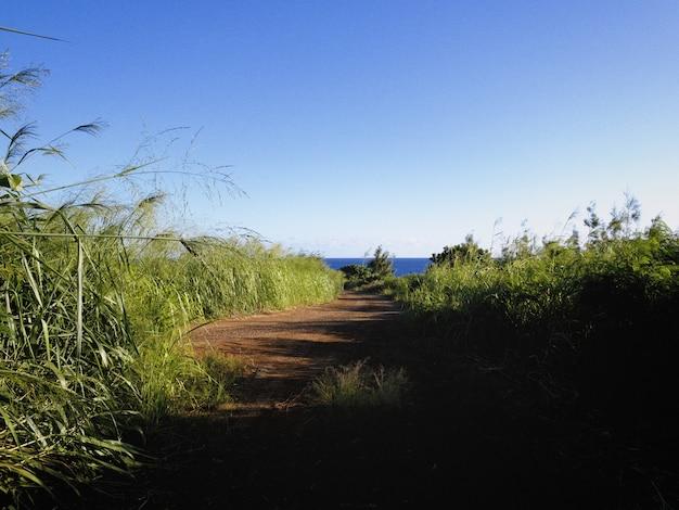 Bela vista de uma estrada cercada por grama alta, indo em direção ao oceano sob o céu azul