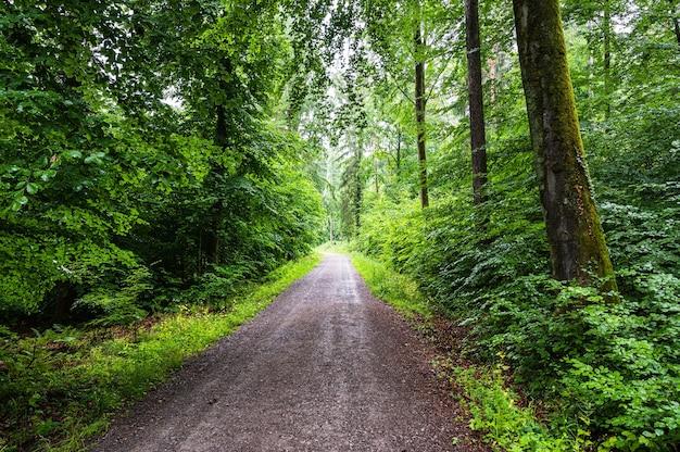 Bela vista de uma estrada de terra em meio à floresta verdejante no verão