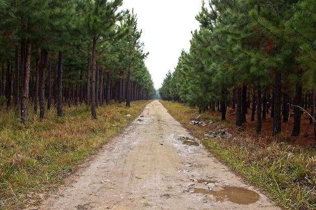Bela vista de uma estrada lamacenta passando por árvores altas incríveis
