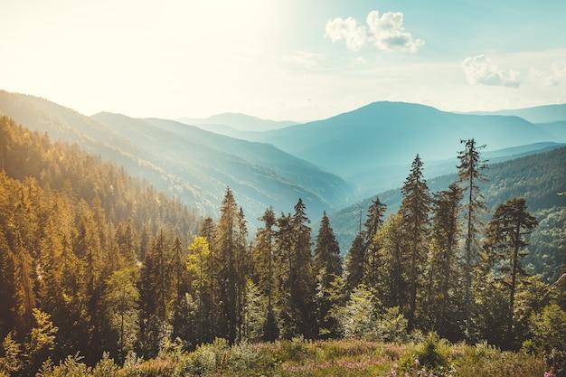 Bela vista de uma floresta de coníferas nas montanhas