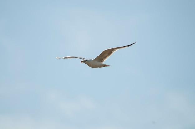 Bela vista de uma gaivota em voo