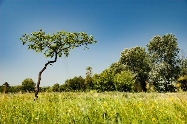 Bela vista de uma jovem árvore