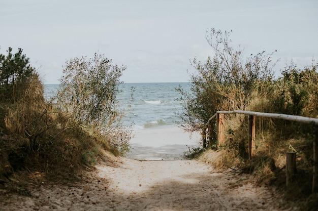 Bela vista de uma passarela para a praia em meio à vegetação