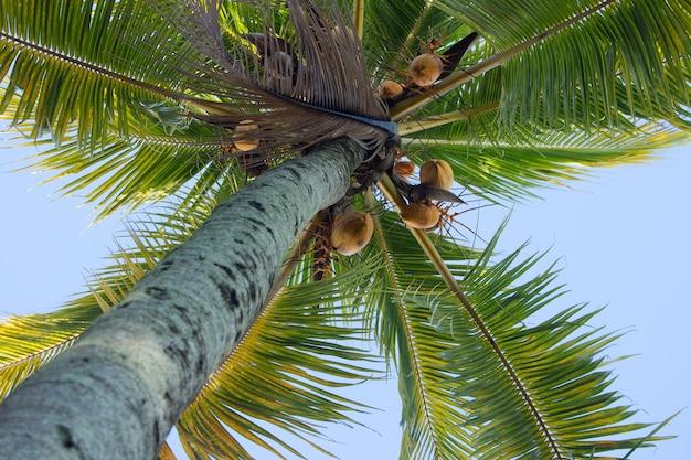 Bela vista do coqueiro de baixo