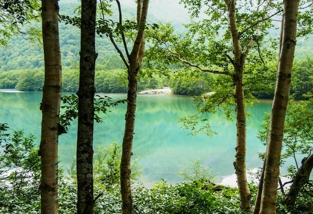 Bela vista do fluxo desce através da floresta na montanha no japão kamikochi