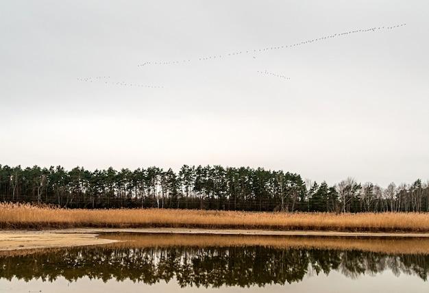 Bela vista do lago cercado por grama e árvores altas no outono com pássaros no céu