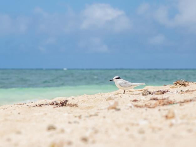 Bela vista do mar com um pássaro branco caminhando na costa da nova caledônia