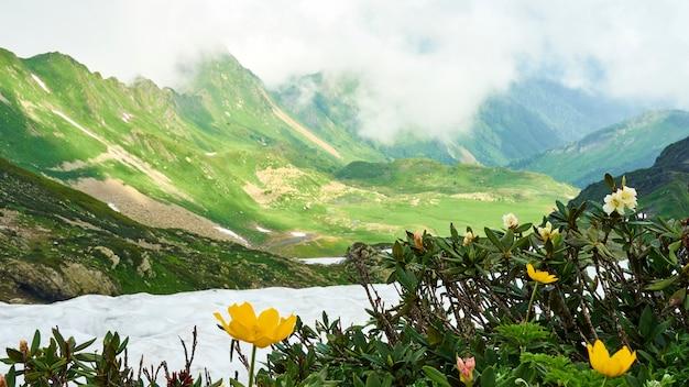 Bela vista do pico da montanha achisho, neve e flores amarelas, verão em sochi, rússia