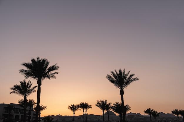 Bela vista do pôr do sol ou do nascer do sol com céu azul e palmeiras tropicais