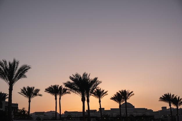 Bela vista do pôr do sol ou do nascer do sol com céu azul, palmeiras tropicais, piscina