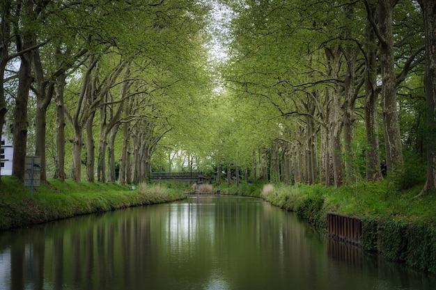 Bela vista do rio correndo em meio a um bosque verdejante