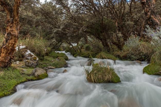 Bela vista do rio fluindo por entre as árvores e plantas