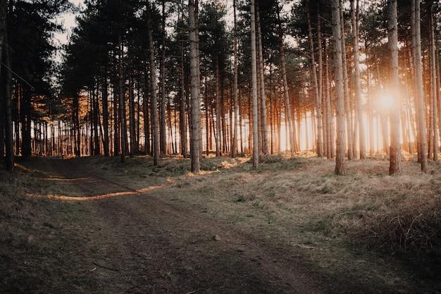 Bela vista do sol brilhando através das árvores em uma floresta capturada em oostkapelle, holanda