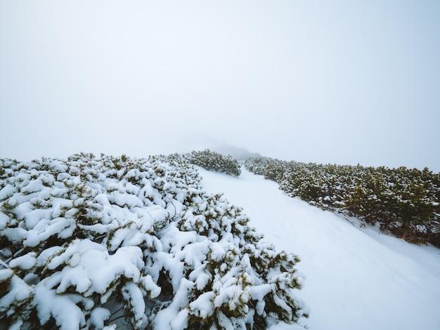 Bela vista dos arbustos cobertos de neve e da colina capturada no nevoeiro na madeira, portugal