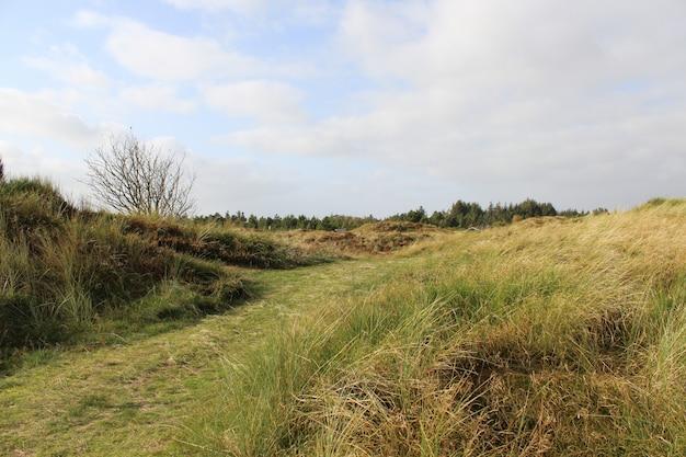 Bela vista dos campos cobertos de grama seca sob o céu nublado