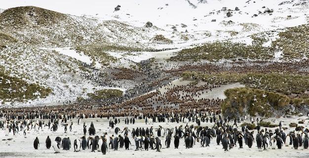 Bela vista dos icebergs na antártica, uma colônia de pinguins na antártica
