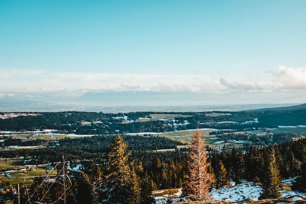 Bela vista dos pinheiros em uma colina coberta de neve com o vasto campo