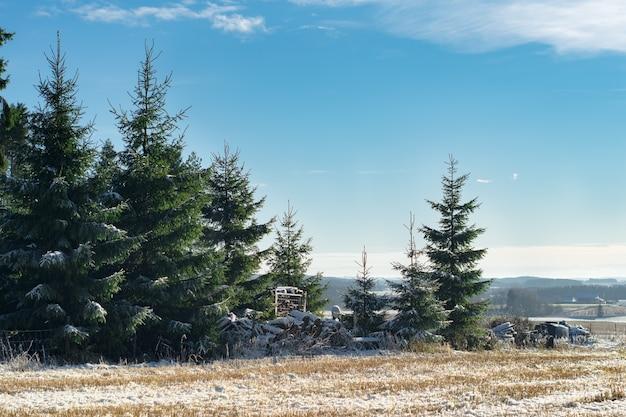 Bela vista dos pinheiros no inverno na noruega