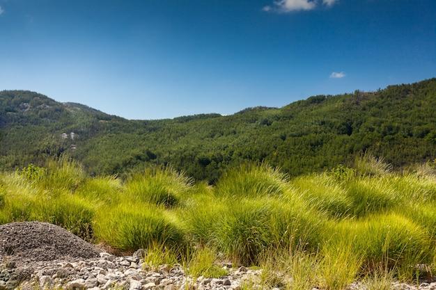 Bela vista em campo com alta grama verde, floresta e montanha