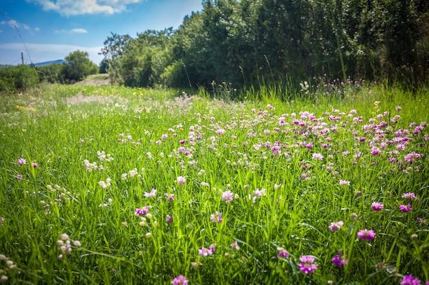 Bela vista em um campo com muitas flores cercado por árvores