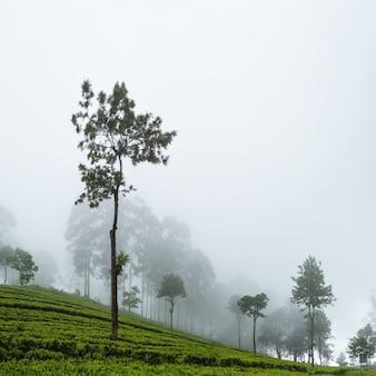 Bela vista na plantação de chá