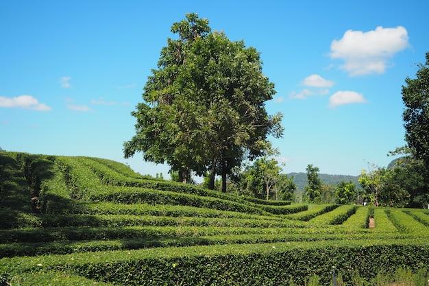 Bela vista natural com paisagem montanhosa e o céu azul e claro com prados