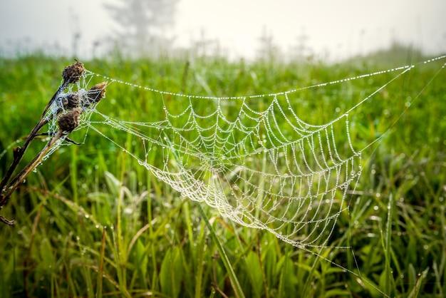 Bela vista natural de pequenos abetos de grama verde e teia de aranha entre a jovem floresta