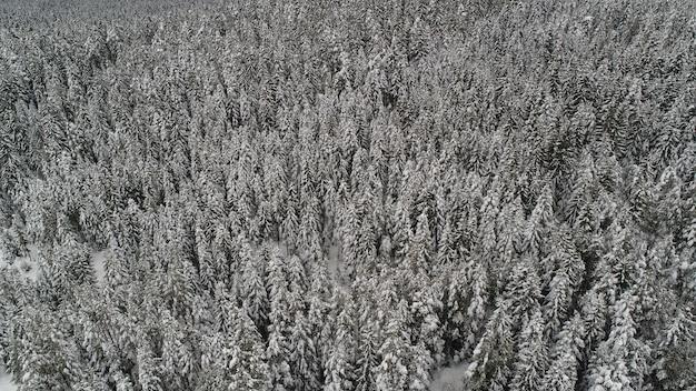 Bela vista sobre a floresta de inverno congelado