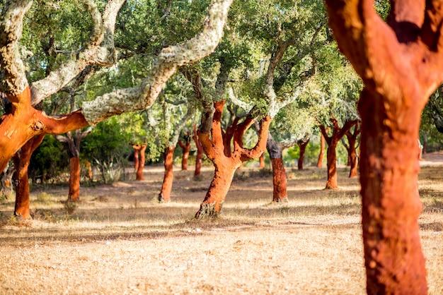 Bela vista sobre a plantação de sobreiros com casca acabada de moer em portugal