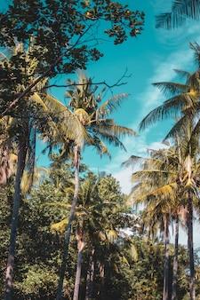 Bela vista vertical das palmas das mãos e do céu azul claro