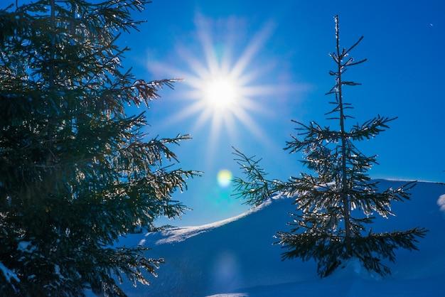 Belas árvores crescem entre montes de neve cobertos de neve