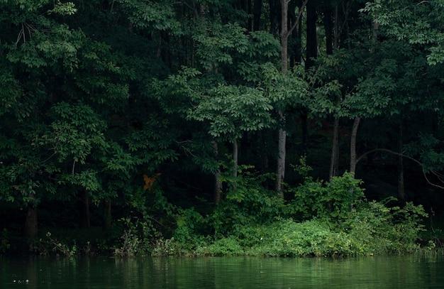 Belas árvores e um lago na plantação de borracha em kerala, índia