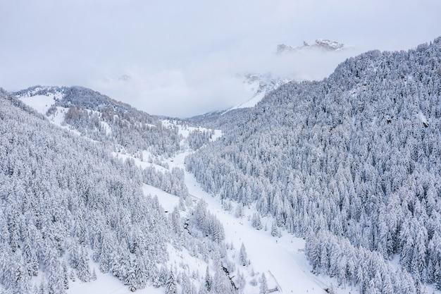 Belas árvores na paisagem de inverno no início da manhã na neve