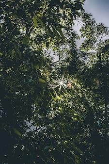 Belas árvores verdes de luz solar intensa