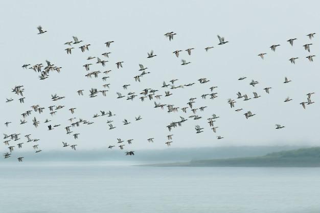 Belas aves aquáticas nos manguezais do parque nacional sundarban