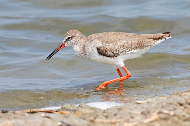 Belas aves marinhas da tailândia