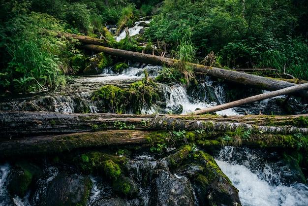 Belas cascatas de riacho de montanha entre matagais exuberantes