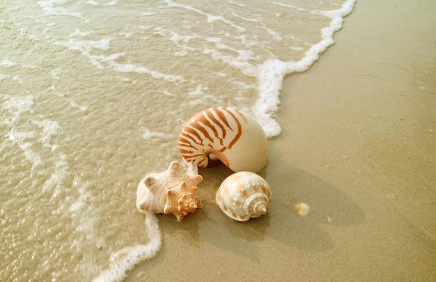 Belas conchas naturais do mar isoladas na praia de areia molhada com retrolavagem