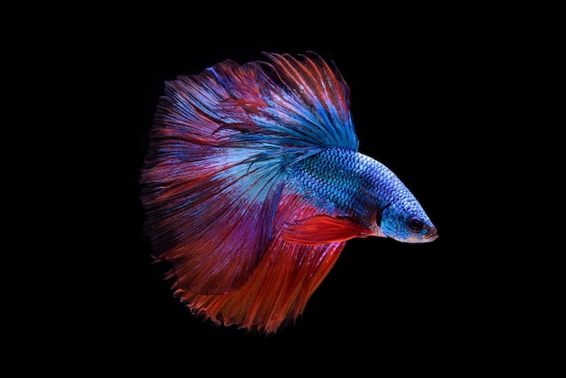 Belas cores