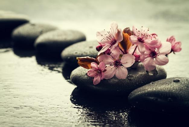 Belas flores rosa spa em spa hot stones on water wet background. composição lateral. espaço de cópia. spa concept. fundo escuro.