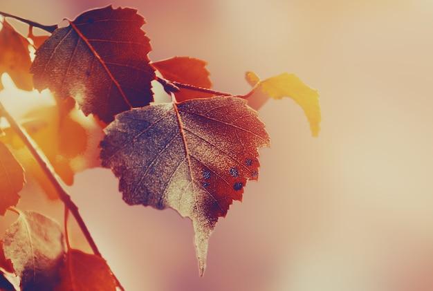 Belas folhas de outono no outono fundo vermelho ensolarado luz do dia tonalidade horizontal