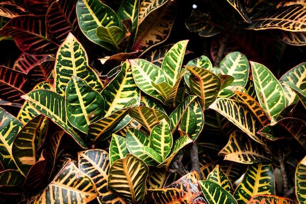 Belas folhas tropicais detalhadas