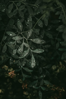 Belas gotículas nas folhas da planta verde