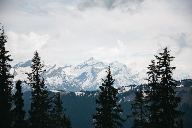 Belas montanhas na neve e nas árvores