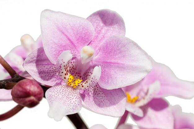 Belas orquídeas de cores diferentes. híbridos de phalaenopsis.